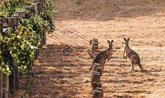 Logan Wines Weingut in Australien