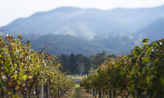 Weingut Logan Wines