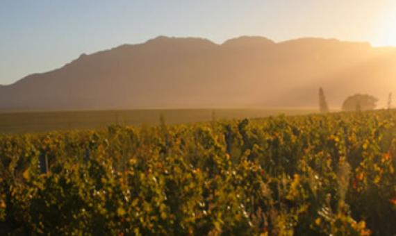Somerbosch Weingut in Südafrika Import Wein
